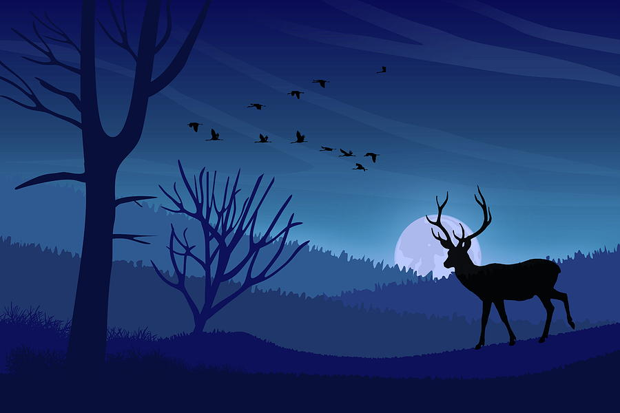 Blue Hour and Wildlife  by Andrea Kollo