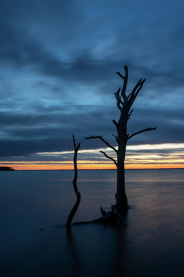 Blue Hour sunset on a bay with dead tree by Kyle Lee