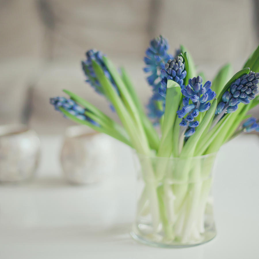 Blue Hyacinths In A Glass Vase Photograph by Cindy Prins