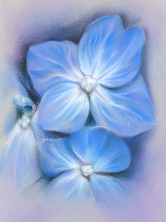Blue Hydrangea by MM Anderson