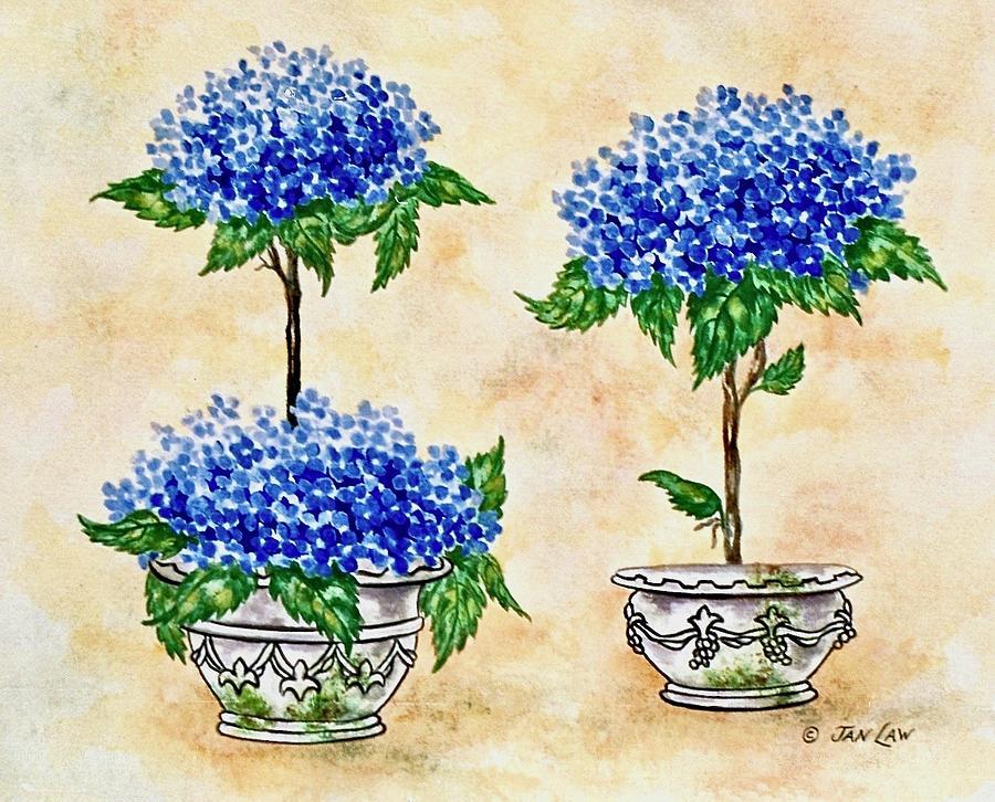 Blue Hydrangea Topiaries by Jan Law