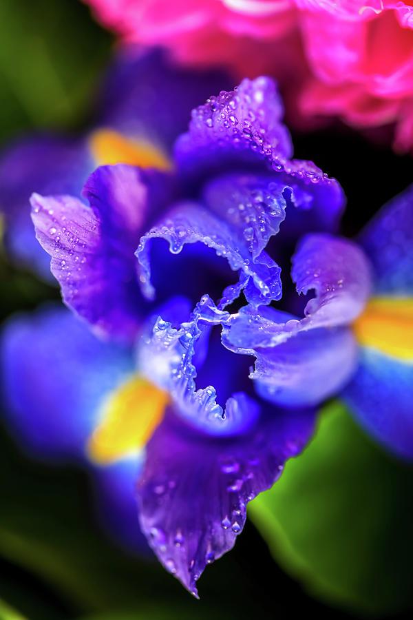 Beautiful Photograph - Blue Iris Dance by Az Jackson
