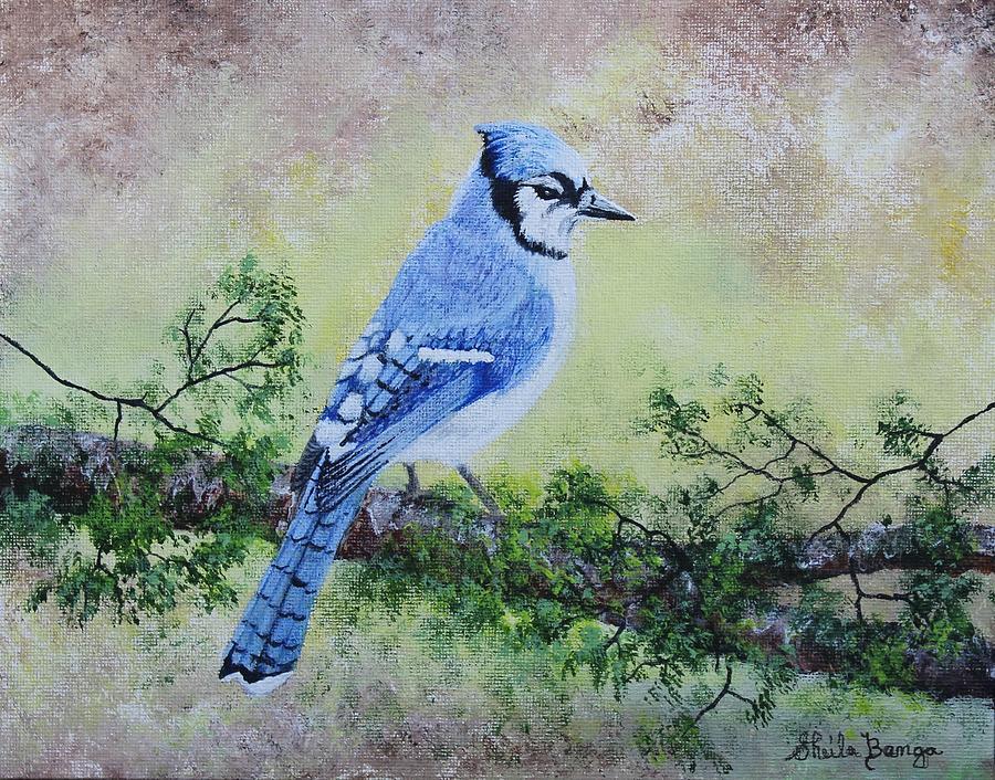 Blue Jay - 1 by Sheila Banga