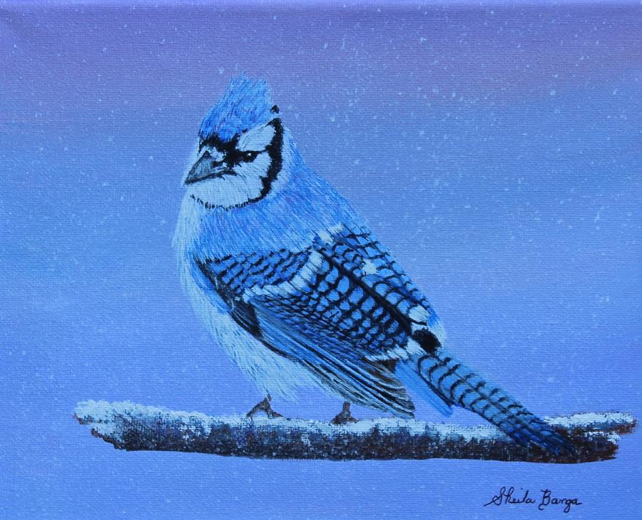 Blue Jay - 2 by Sheila Banga