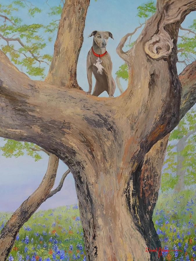 Blue Lacey in a Tree by Daniel Adams