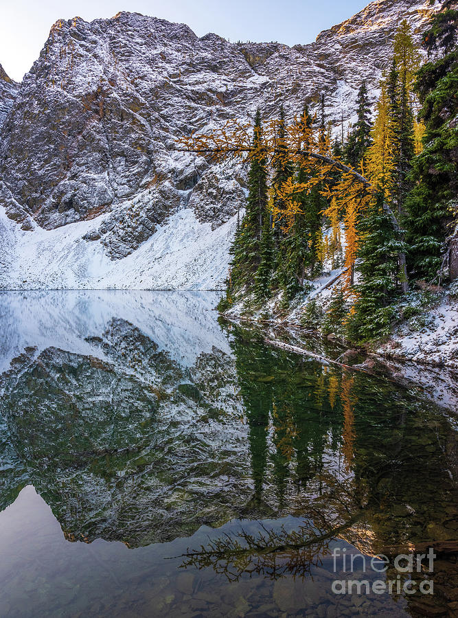 Blue Lake Fall Colors Curved Larch by Mike Reid