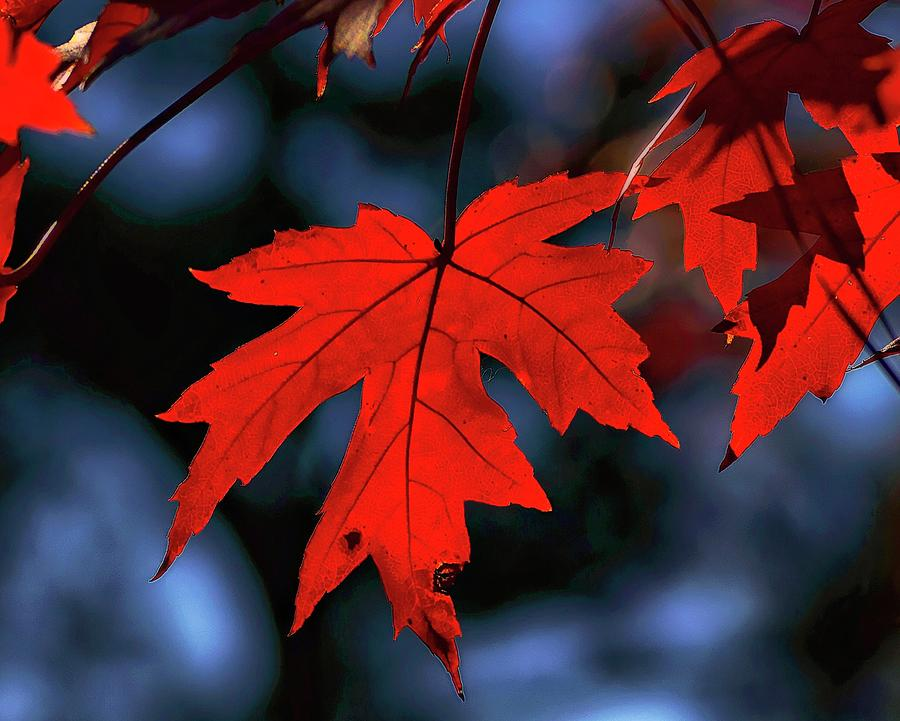 Autumn Passion by Susan Callaway