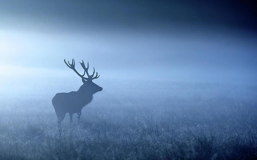 Blue Mist Photograph by Markbridger
