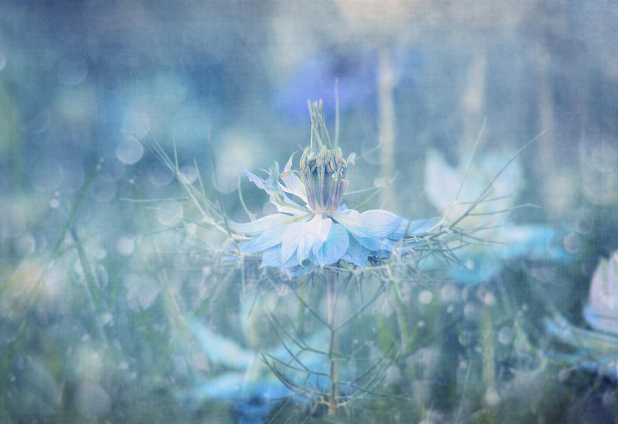 Blue Misty Magic by Terry Davis