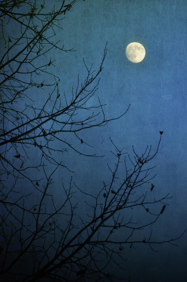 Blue Moon Photograph by Susan Mcdougall Photography