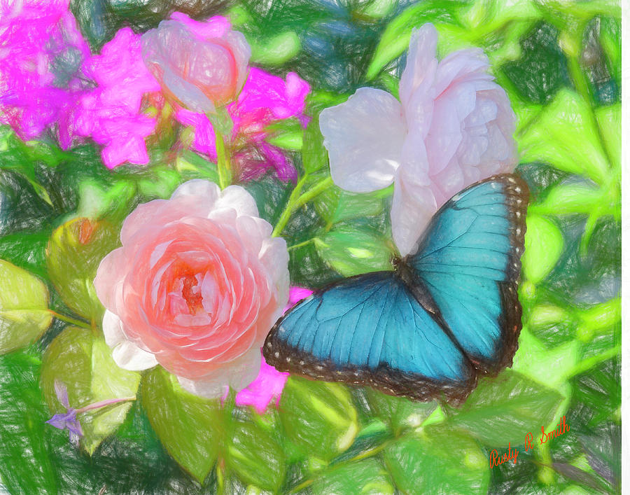 Blue Morpho butterfly on pink rose. by Rusty R Smith