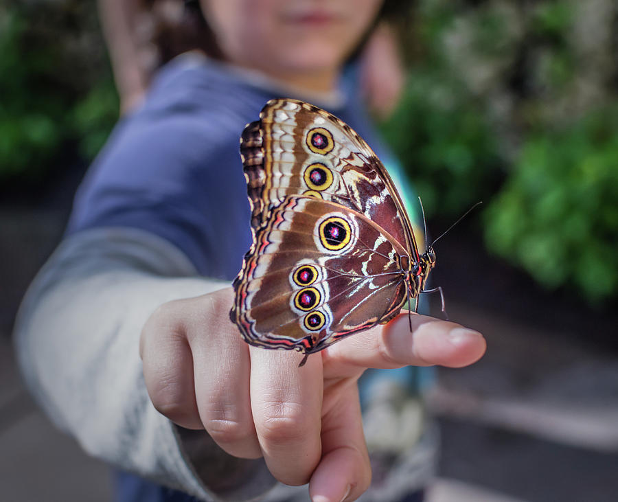 Blue Morpho by Steven Greenbaum