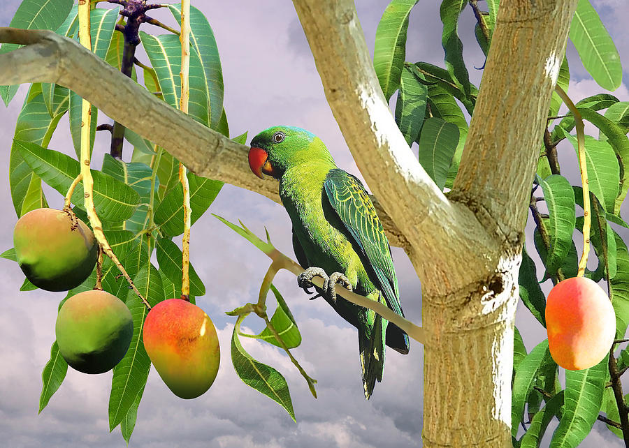Parrot Digital Art - Blue-naped Parrot In Mango Tree by M Spadecaller
