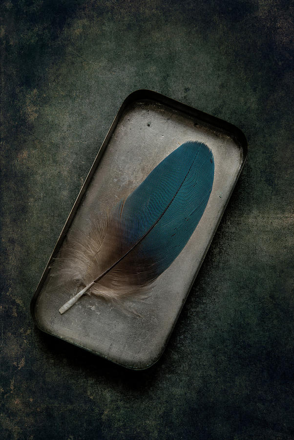 Blue parrot feather by Jaroslaw Blaminsky