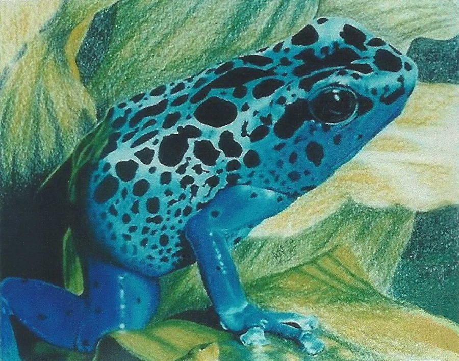 Blue Poison Dart Frog by Barbara Keith