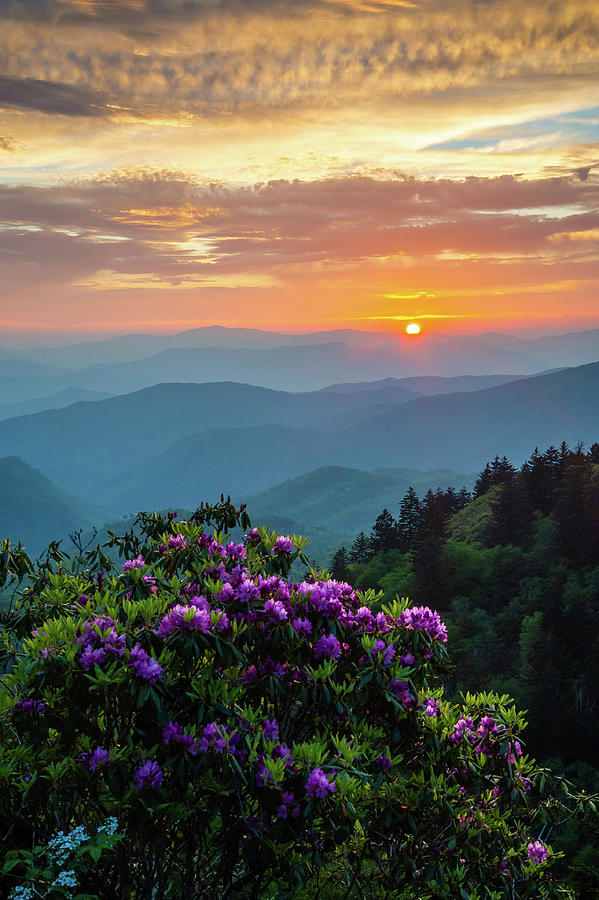 Blue Ridge Parkway Asheville Nc Rhododendron Sunset Scenic