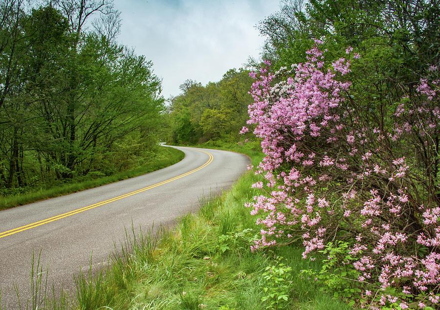 Blue Ridge Parkway in Bloom by Joye Ardyn Durham