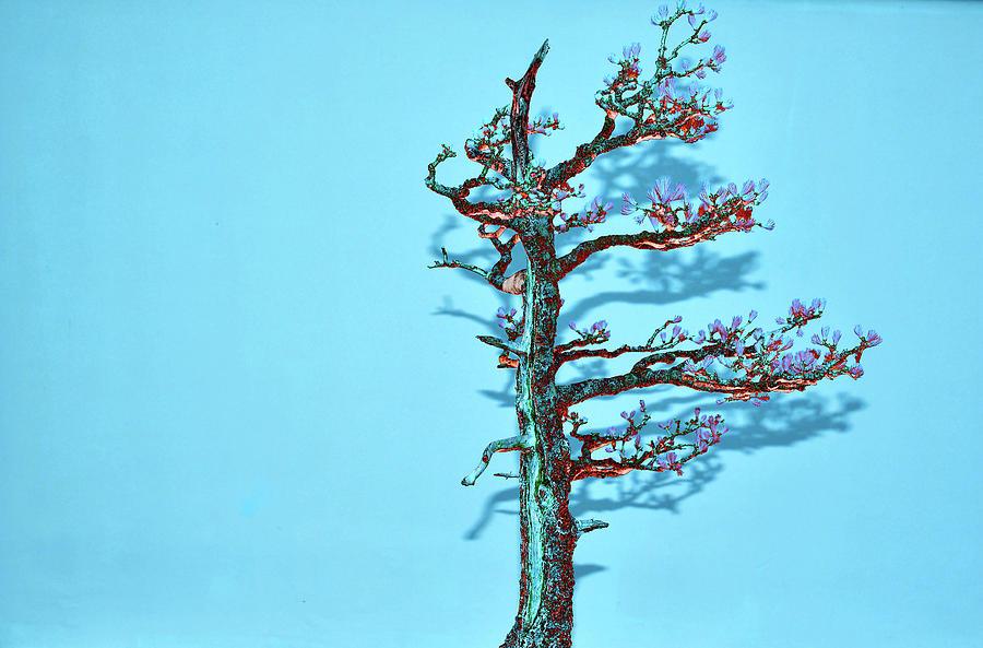 Bonsai Digital Art - Blue Shadow Bonsai Tree by Tom Kelly