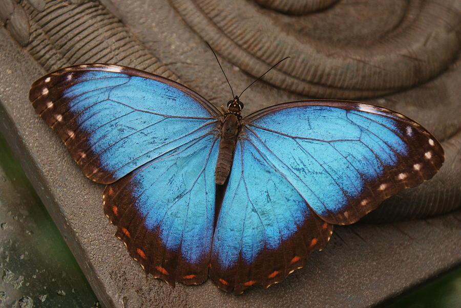 Blue Shimmer by Stephanie Pieczynski