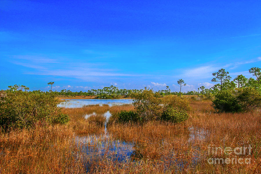 Blue Sky and Marsh by Tom Claud