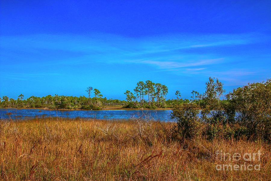 Blue Sky Blue Water Marsh by Tom Claud