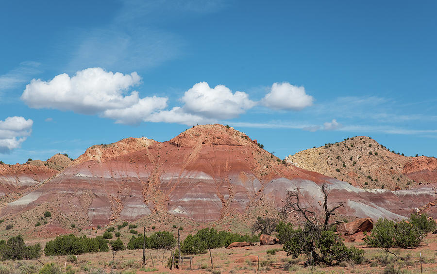 Blue Sky Red Rock and Scraggly Juniper by Tom Cochran