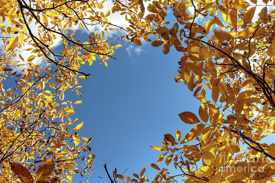 Blue sky surrounded by yellow leaves by Catalin Petolea