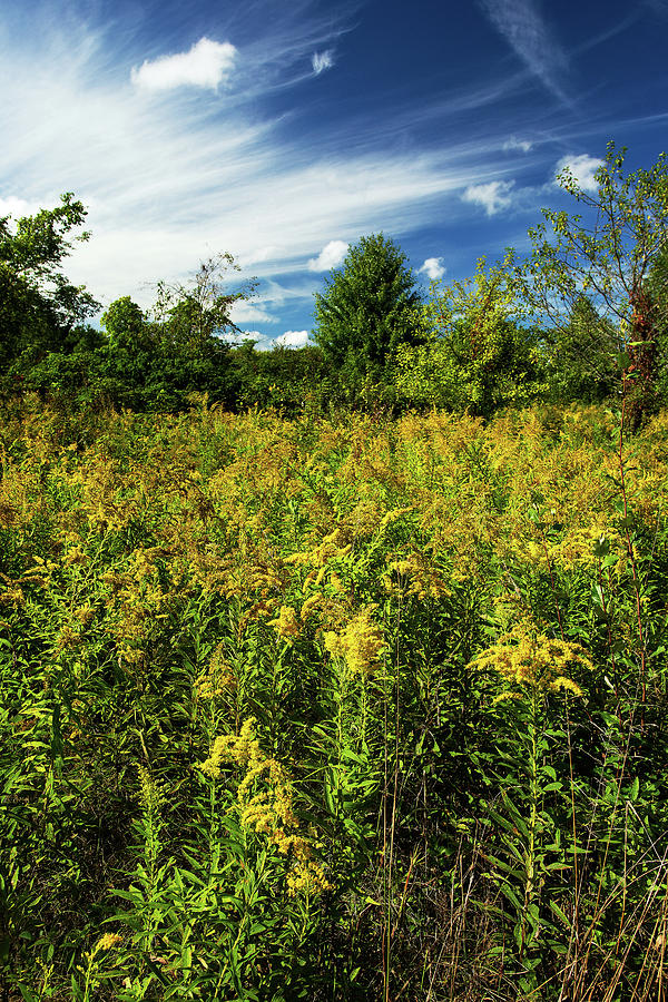 Blue Sky White Clouds Yellow Weeds Photograph