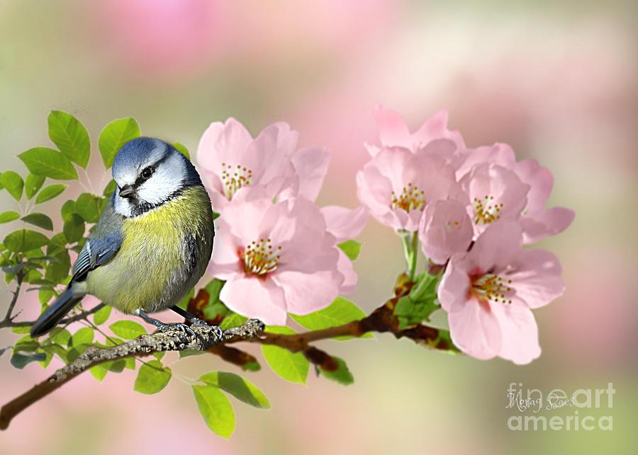Blue Tit on Apple Blossom by Morag Bates