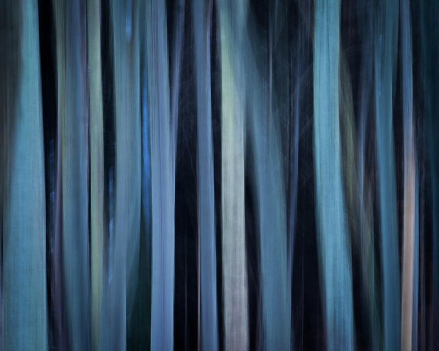 Moray Photograph - Blue Trees 1 by Peter OReilly