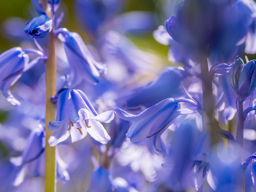 Bluebell Afternoon by Derek Dean