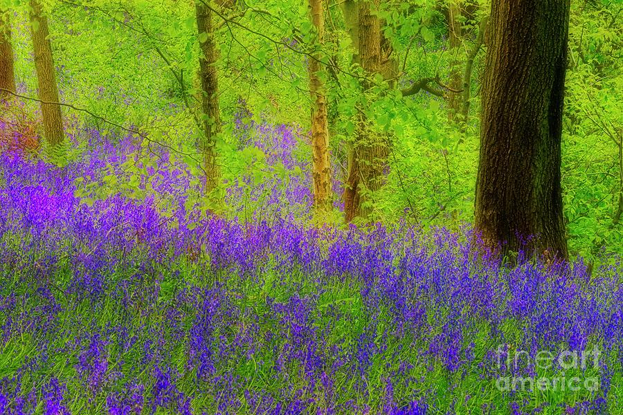 Bluebell Art by Martyn Arnold