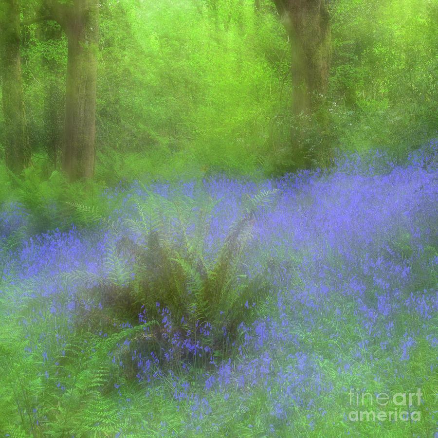 Bluebell Impression by Janet Burdon