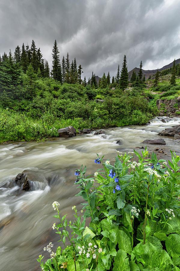 Bluebells Beside The River by Denise Bush