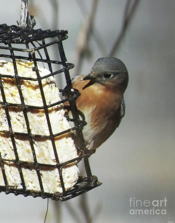 Bluebird 35 by Lizi Beard-Ward