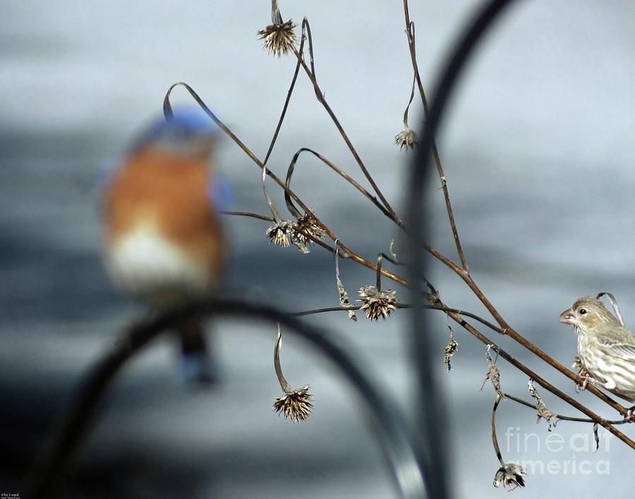 Bluebird 41    by Lizi Beard-Ward