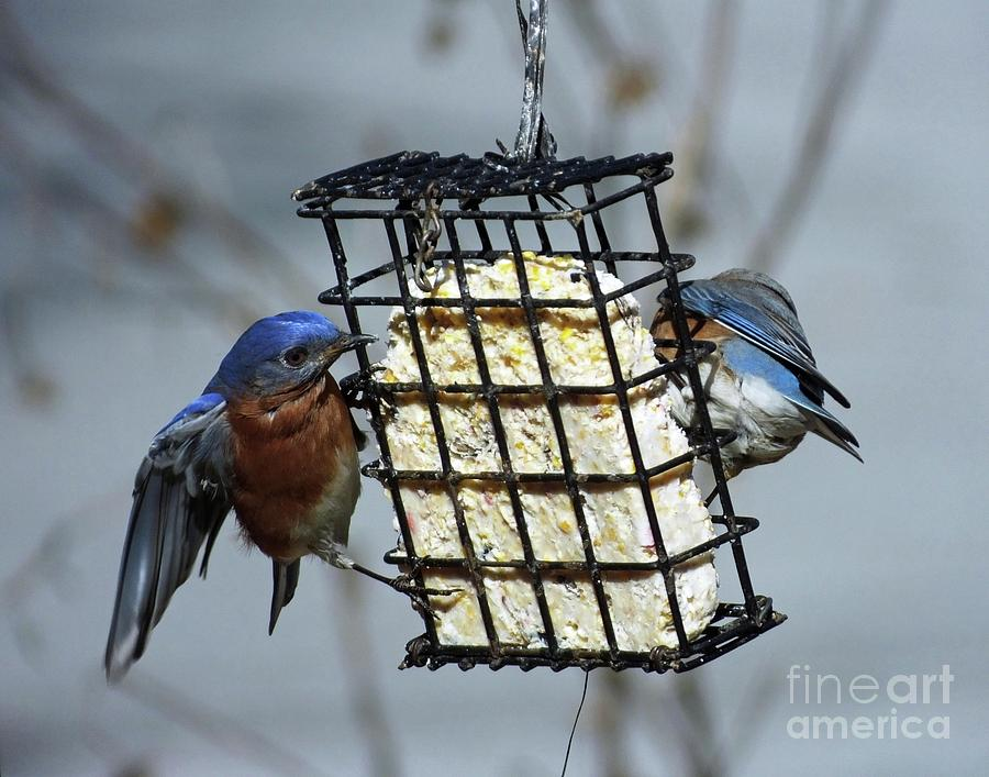 Bluebird 43 by Lizi Beard-Ward