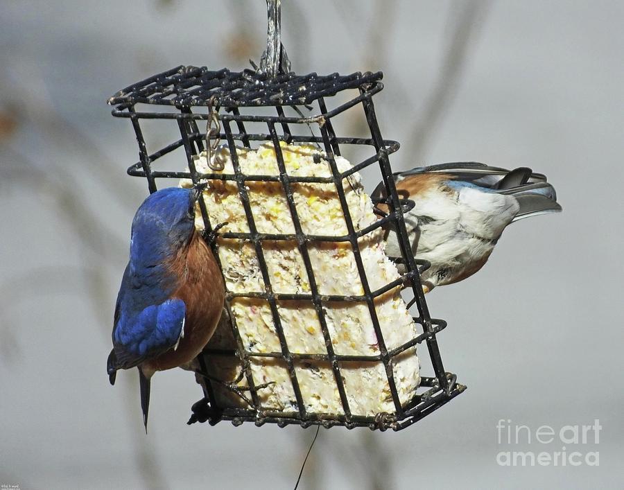 Bluebird 45 by Lizi Beard-Ward