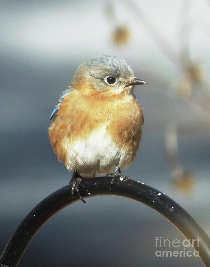 Bluebird 48 by Lizi Beard-Ward