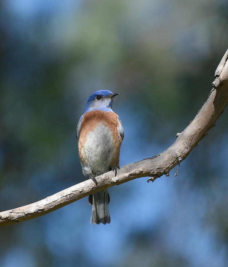 Bluebird Branch by Fraida Gutovich
