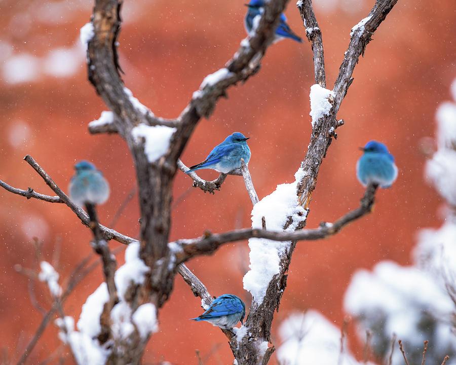 Bluebird Compass by Gary Kochel