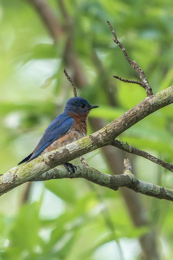 Bluebird Man by Ree Reid