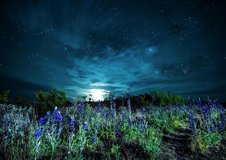 Bluebonnet Moonrise by David Morefield