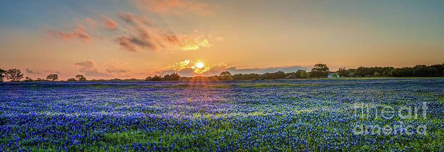 Texas Bluebonnet Photograph - Bluebonnet Sunset Panorama - Texas Bluebonnet Pictures  by Bee Creek Photography - Tod and Cynthia