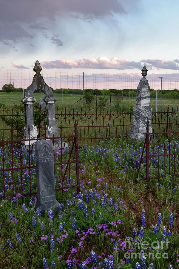 Bluebonnets and headstones by Paul Quinn