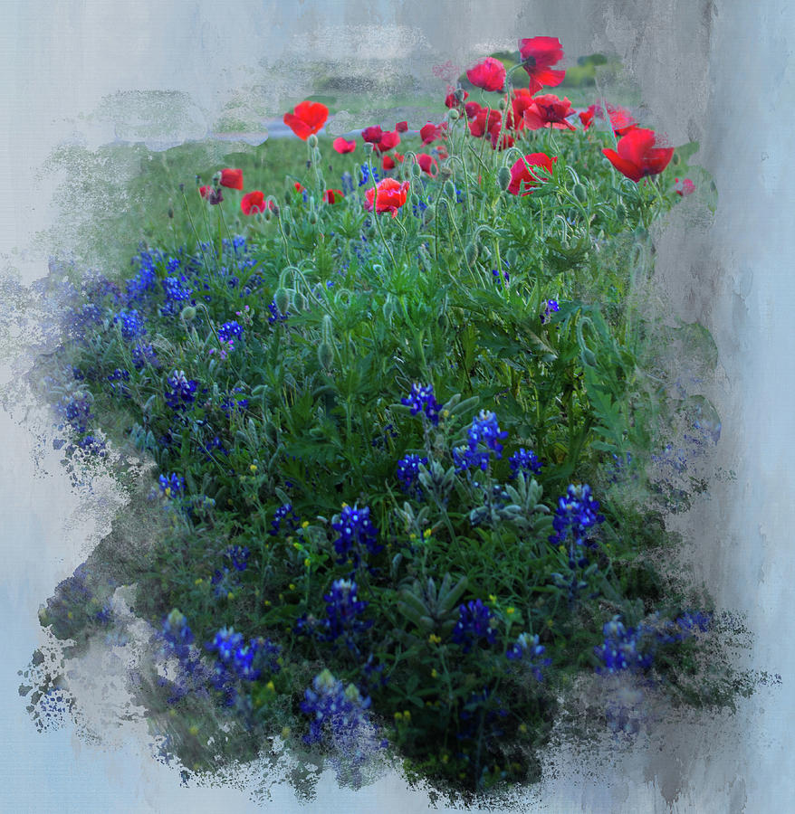 Bluebonnets and Poppies by Jolynn Reed