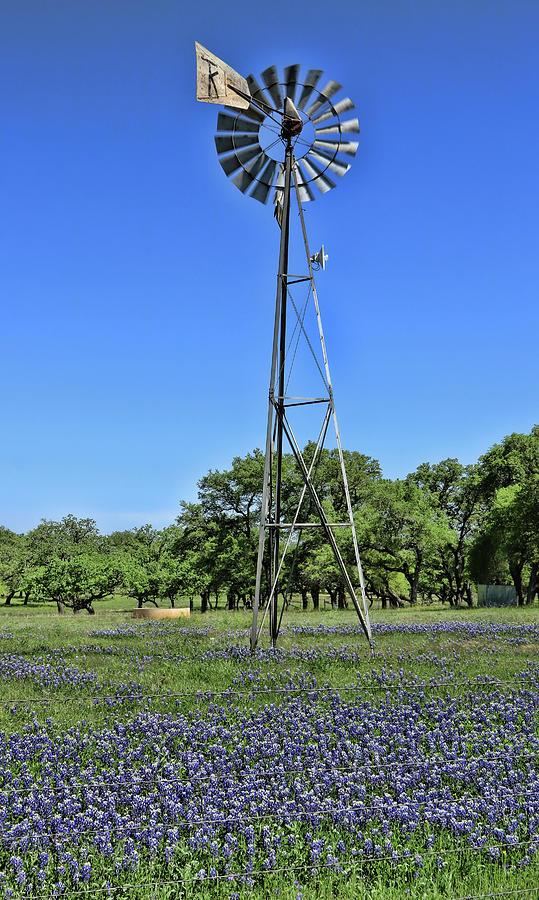 Bluebonnets of Texas # 3 by Allen Beatty