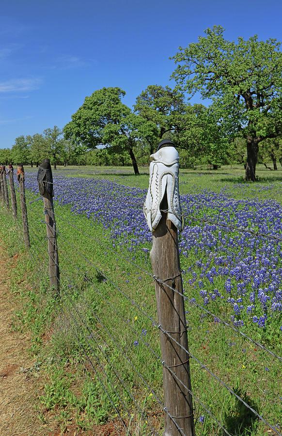 Bluebonnets of Texas # 7 by Allen Beatty