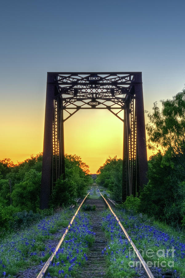 Bluebonnets Photograph - Bluebonnets On The Abandoned Railroad by Paul Quinn