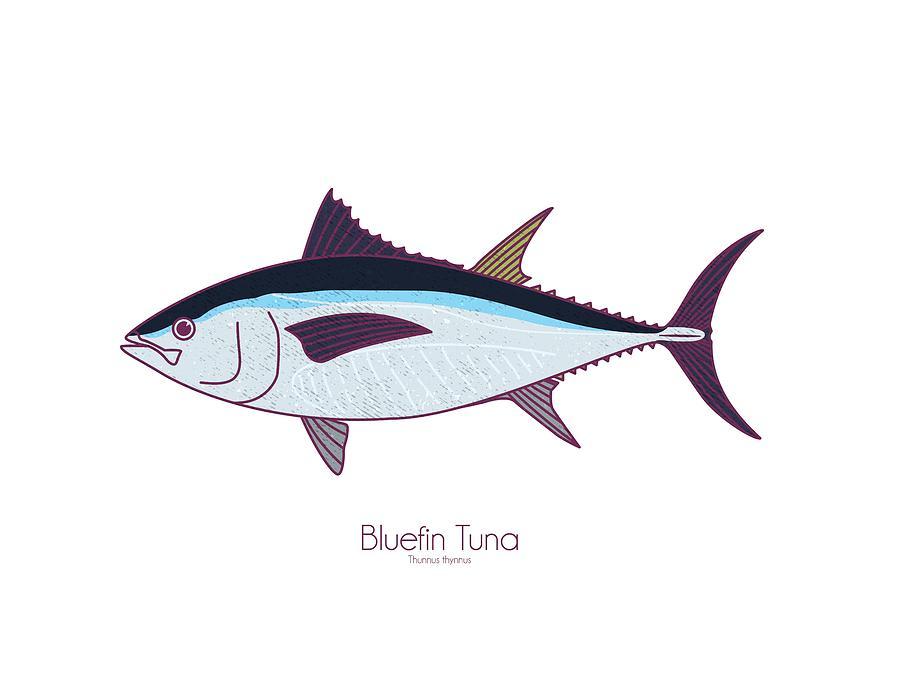 Bluefin Tuna by Kevin Putman